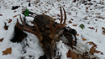 Whitetail Deer Hunting Buck