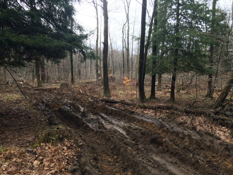 Clearing Area for a Whitetail Deer food Plot